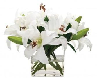 White Casablanca Lily